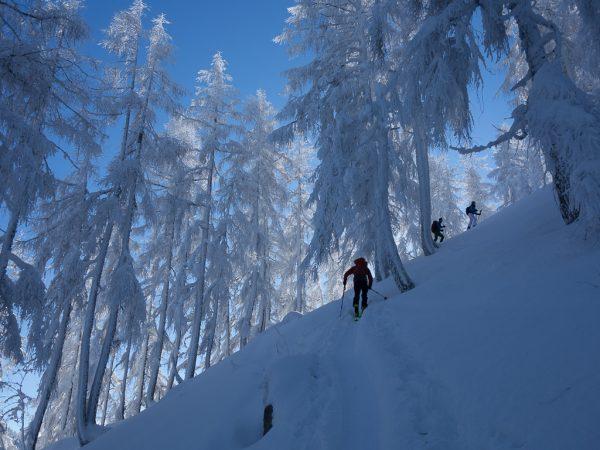 Leichte Skitour für Genießer gefrorene Bäume